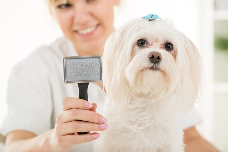 Groomers: 10 steps to choose the best one