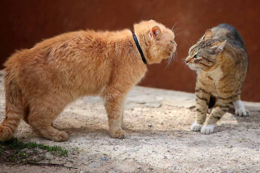 Cat Aggression – What You Need to Know