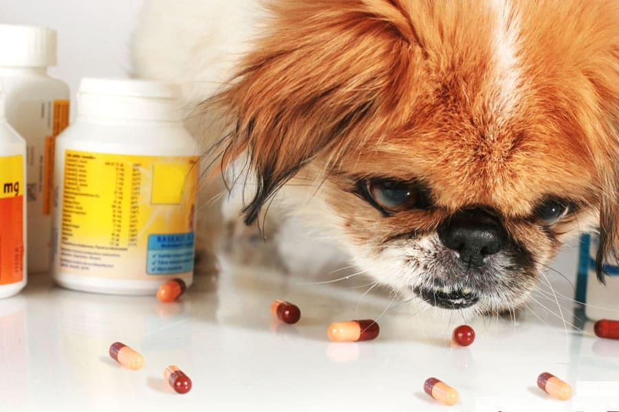 Hidden Dangers For Pets Around Home