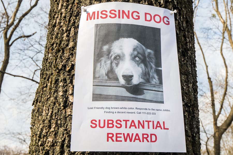Bringing Your Lost Dog Home ASAP