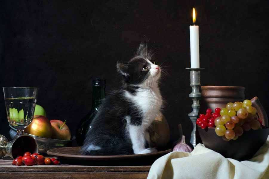 Thanksgiving Safety Tips for Cats
