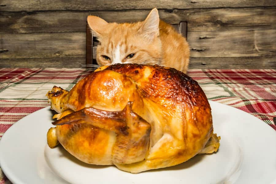 Thanksgiving Treats You Can Share With Cats
