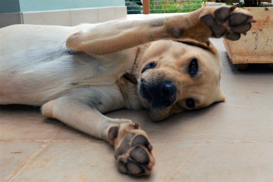 Paw Pads: Protect Your Dog's From Injuries