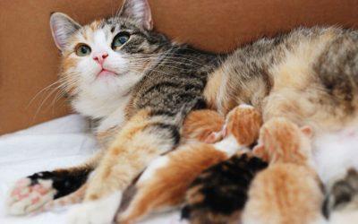 Spaying/Neutering: Increase Cat's Longevity