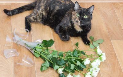 Separation Anxiety-Signs Cat Suffers From It