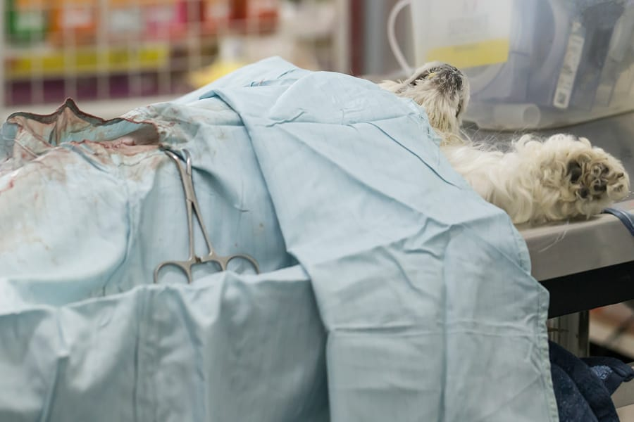 Neutering/Spaying: When Is the Right Time?