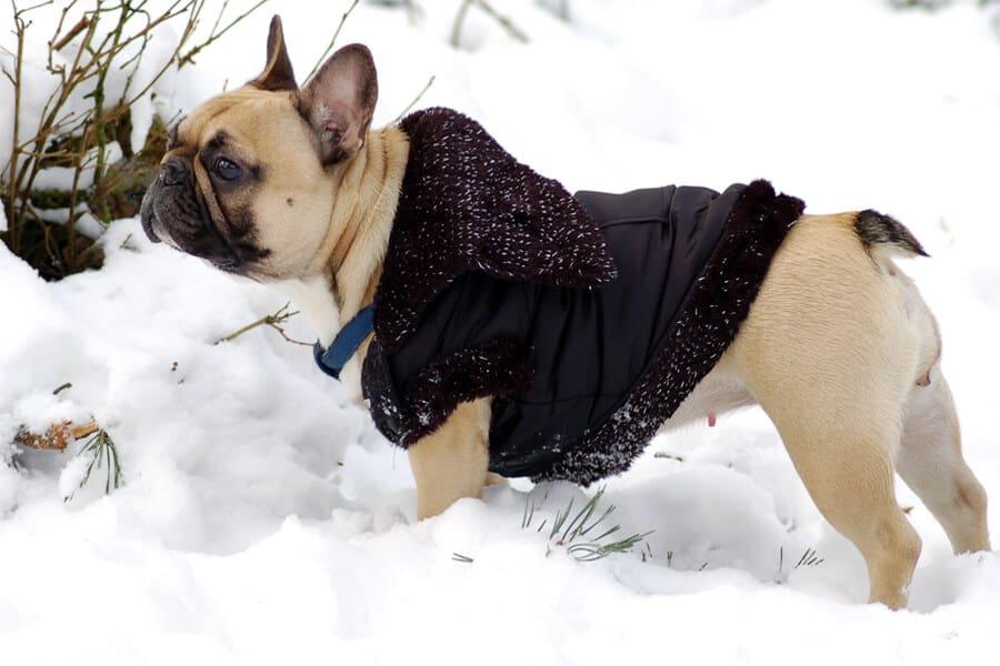 Keeping Dogs Warm on Winter Walks