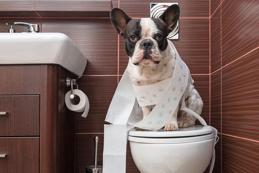 Potty Training Your Dog or Puppy