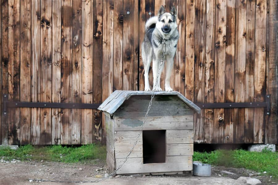Tethered Dogs: New Restraining Bill in WA