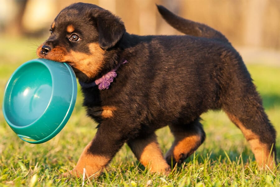Dog Bowl: Importance of Cleaning
