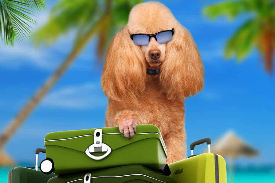 Pet-Sitting Options for the Travel Lover
