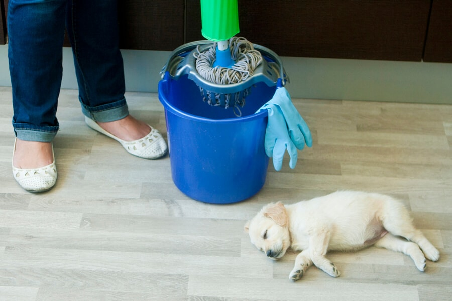 Cleaning Products-Pet Safe & Store-Bought