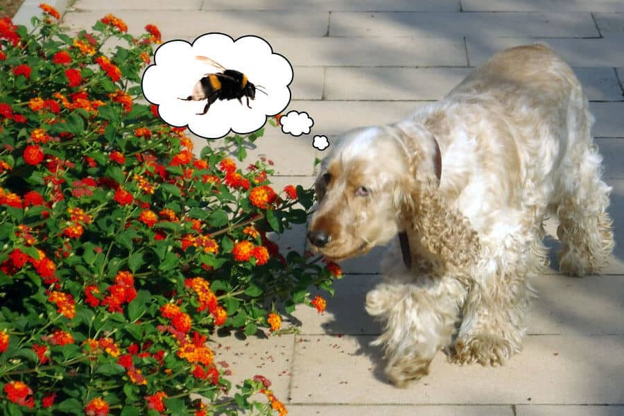 Bees-How to Keep Dog Safe From Them