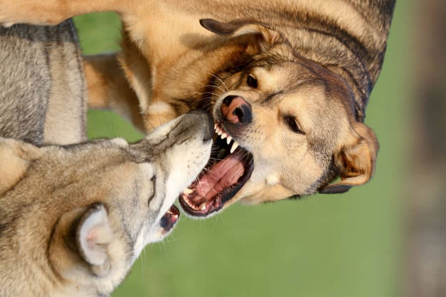 Aggression: Tips for Dogs Who Show It