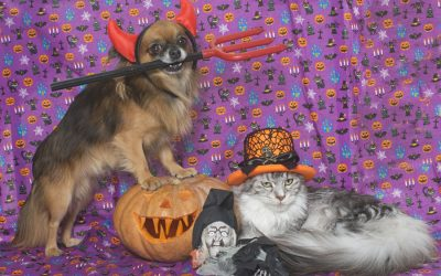 Halloween-Photography-Pet
