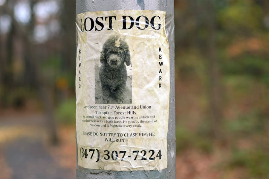 Tips for Finding a Lost Pet