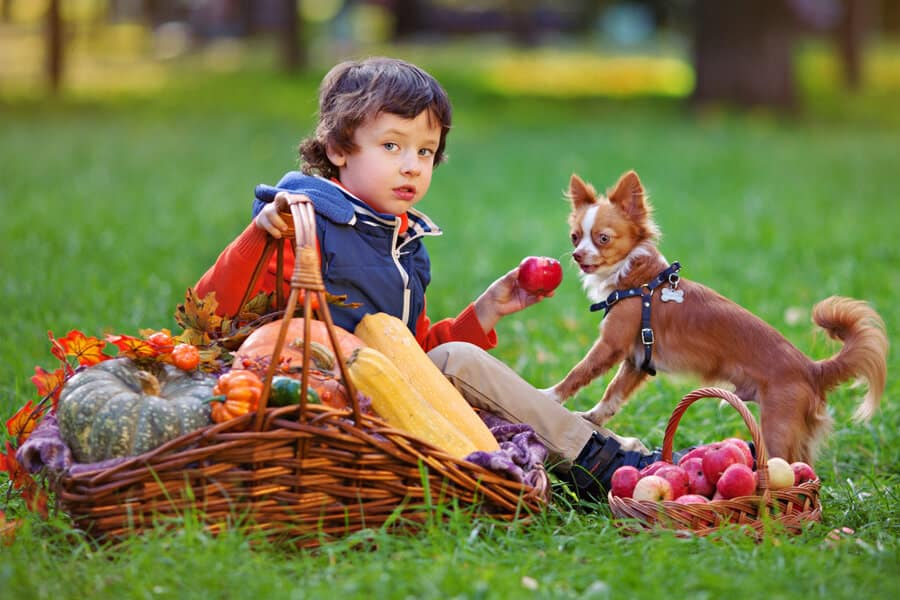 Thanksgiving Food You Can Share With Fido