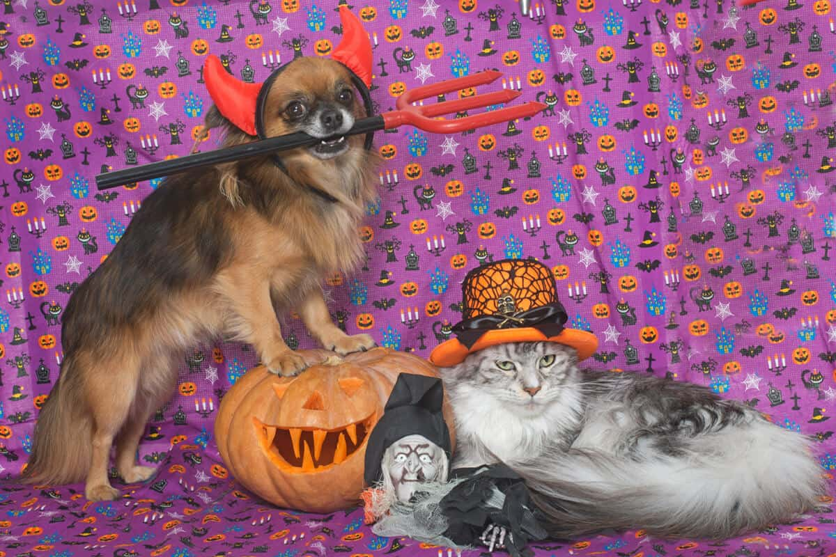 Dog and Cat dressed in Halloween Costumes