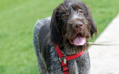 Exercise: Benefits for Dogs
