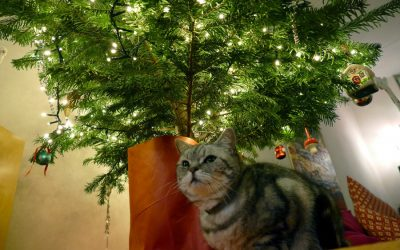 Christmas Tree: Setting Up Safely for Your Pets