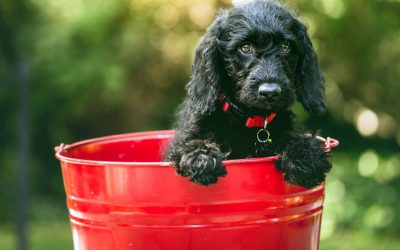 dog in pail trying to decide what to put on bucket lists