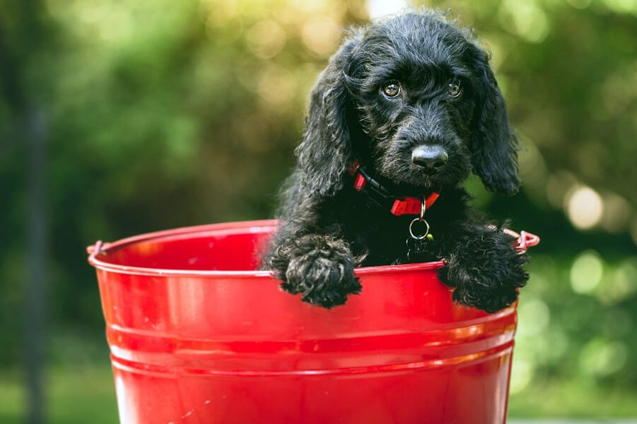 Bucket Lists for Dogs