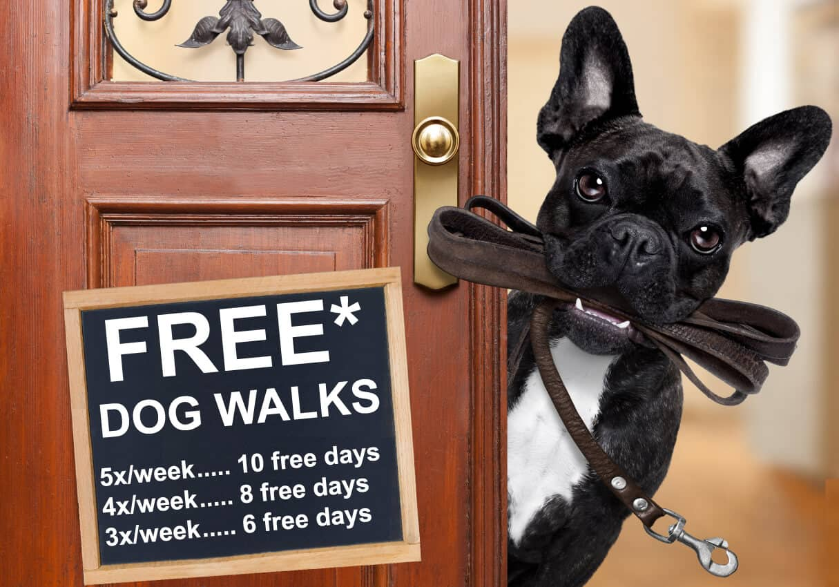 Dog Walking Discount