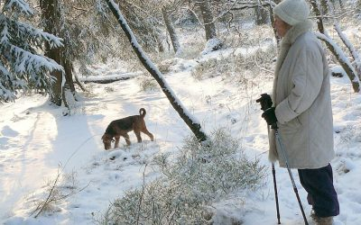 dog and owner enjoying an outdoor winter activity
