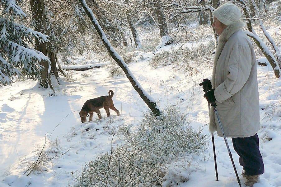 Outdoor Winter Activities for Dogs