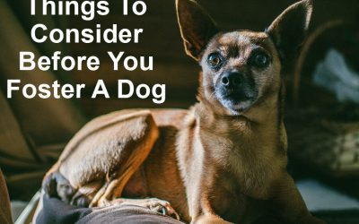 Fostering Pets: Things To Consider