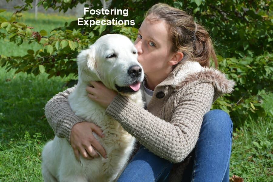 Foster Parent Expectations
