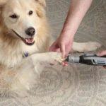 listed on helpful pet items list: Dremel Cordless Pet Grooming Kit