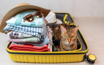 Traveling with pets during COVID-19