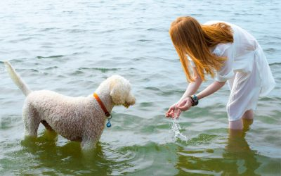 Woman playing with dog in water during Summer