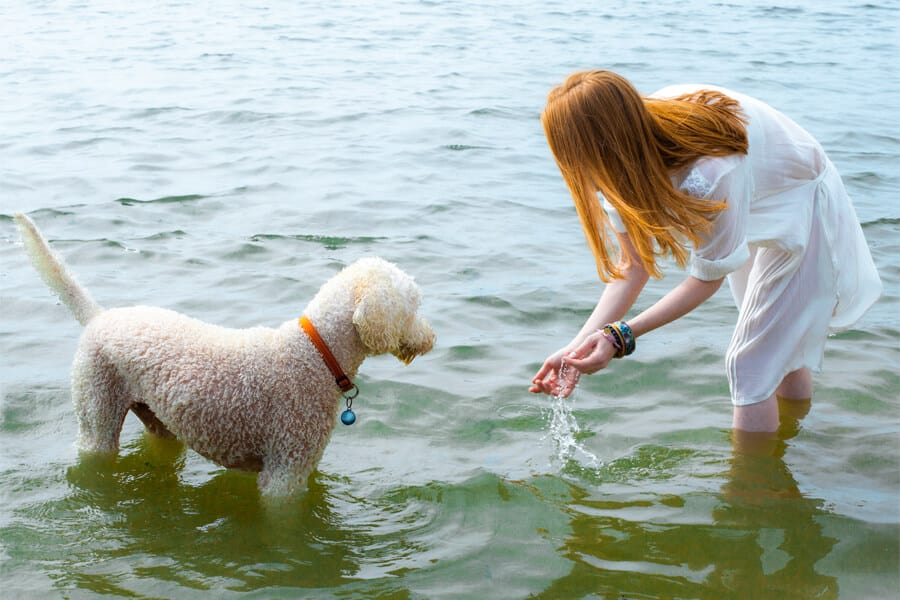 Summer: Safety Tips for Pet Outings