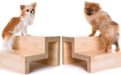 two dogs modeling dog stairs
