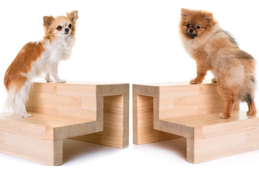 Stairs or Ramps? Choosing the Right One for Your Dog