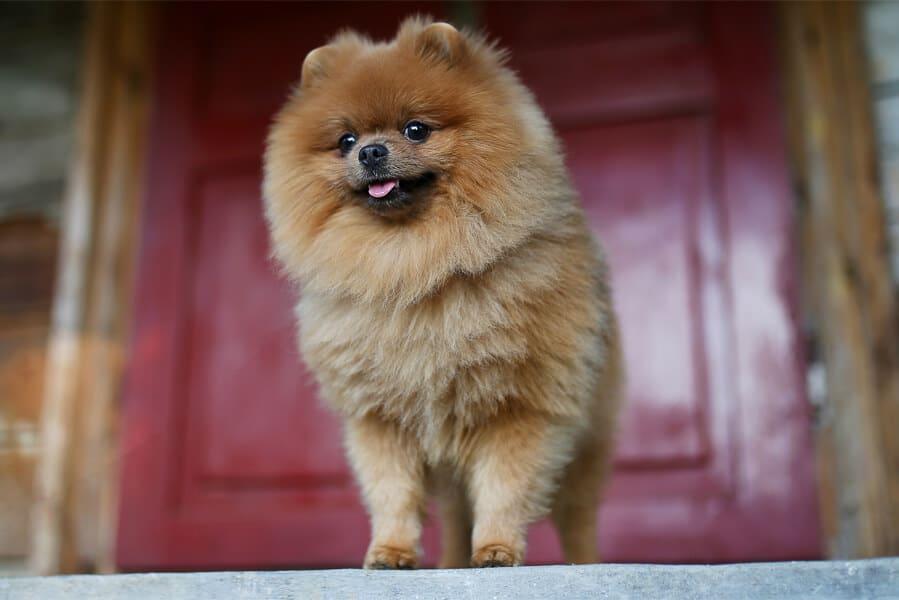 Doorways: Training Puppies To Avoid Dashing Through Them
