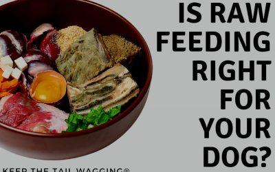 visual of the raw feeding diet