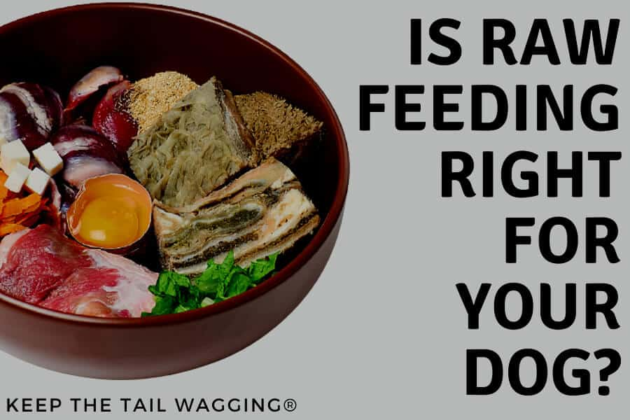 Raw Feeding: Is It Right for Your Dog?