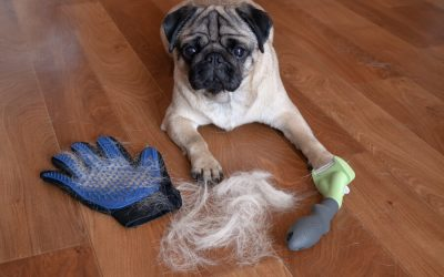 Dog with grooming tools