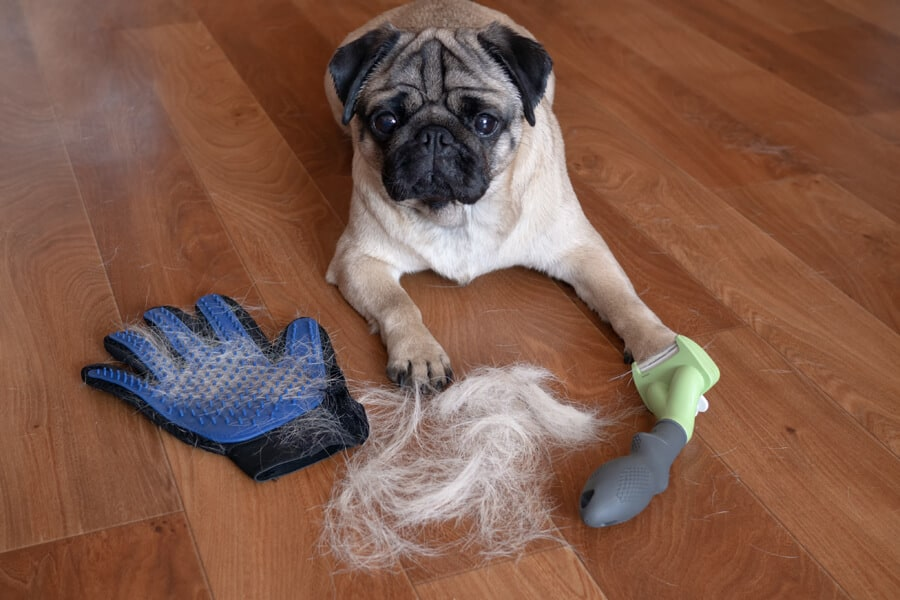 Fall: Essential Dog Grooming Tips
