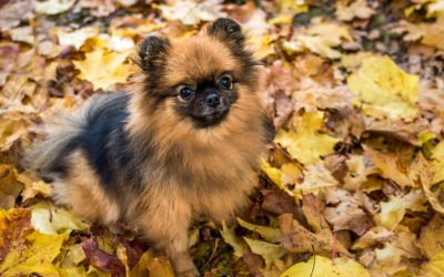 dog sitting in fall leaves