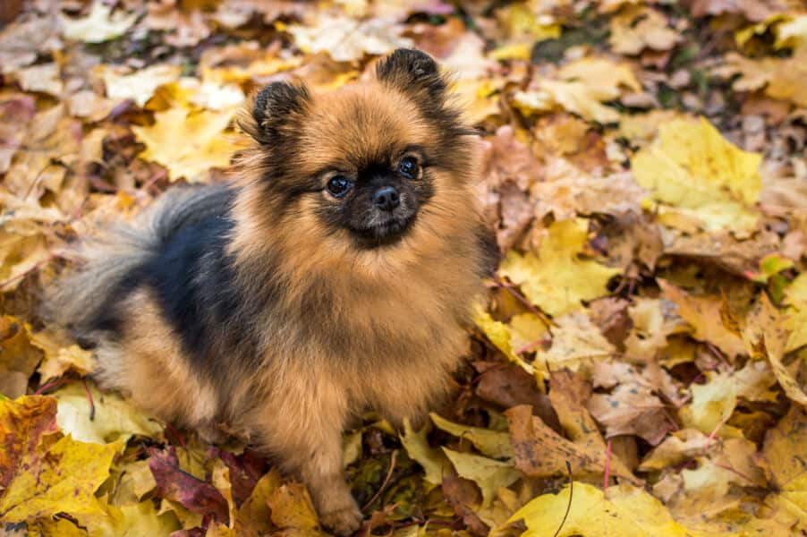 Fall Safety Tips For Dog Owners