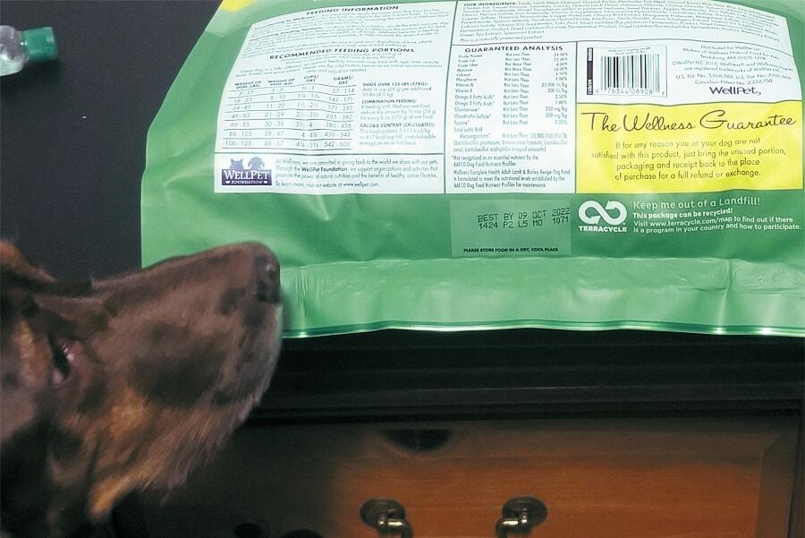 Pet Food-Essential Tips to Keep in Mind