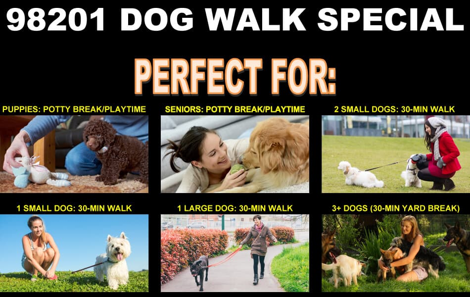 Dog Walk Special